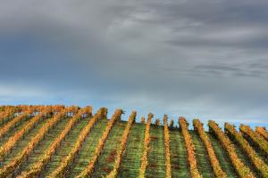 Sky and Vine by Vincent James