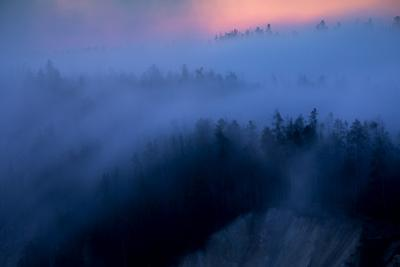 Solitude Fog Flow & Sunrise Glow Trees Canyon Yellowstone Wyoming by Vincent James