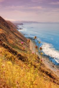 Sonoma Coast Mist by Vincent James