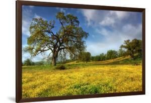 Spring at Shell Creek by Vincent James