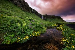 Spring Drama and Wildflowers, Seljalandsfoss, Iceland by Vincent James