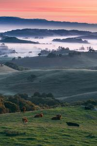 Spring Hills With Fog Petaluma Sonoma California by Vincent James