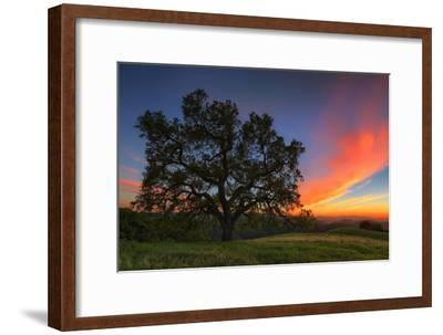 Spring Oak Tree Sunset From Mount Diablo Contra Costa Walnut Creek by Vincent James