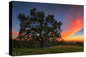 Spring Oak Tree Sunset From Mount Diablo Contra Costa Walnut Creek by Vincent James