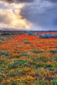 Spring Storm by Vincent James