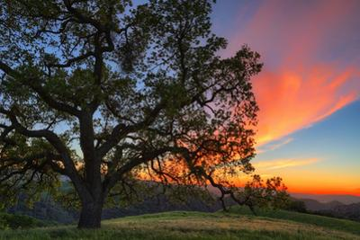 Spring Sunset Oak Tree From Mount Diablo Contra Costa Walnut Creek by Vincent James