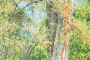 Spring Tree Impressions by Vincent James