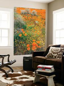 Spring Wildflower Design by Vincent James