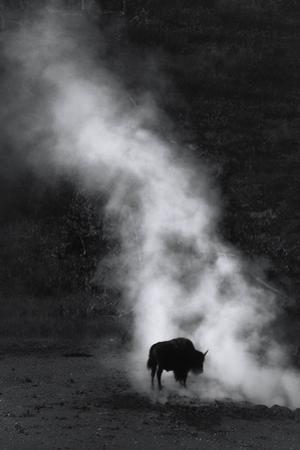 Steam Clean Acid Wash Face Peel Bison Mist Yellowstone National Park by Vincent James