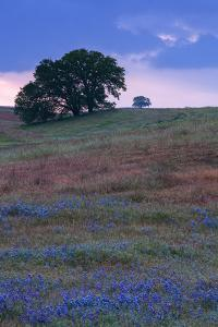 Stormy Afternoon and Wildflowers, Central California, Atascadero, Paso Robles by Vincent James