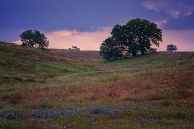 Stormy Afternoon Trees, Central California, Atascadero, Paso Robles by Vincent James