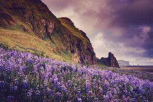 Summer Bloom In Vik Southern Iceland Beach Shoreline by Vincent James
