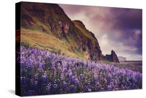 Summer Bloom In Vik Southern Iceland Beach Shoreline by Vincent James