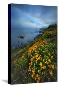 Summer Coast Wildflowers Carmel Monterey Big Sur Beach by Vincent James