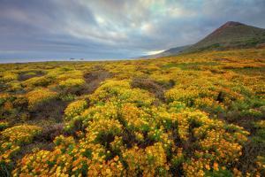 Summer Coastal Wildflower Landscape by Vincent James