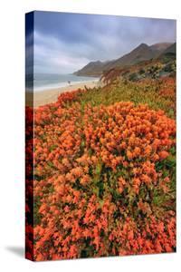 Summer Coastal Wildflowers Landscape, Carmel California by Vincent James