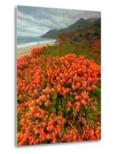 Summer Morning Coastal Color by Vincent James