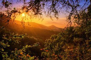 Summer Wonderland at Sunrise Oakland Hills California by Vincent James