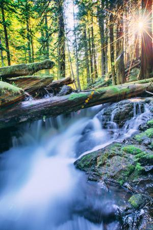 Sun and Panther Creek Flowing Through Forest, Columbia River Gorge, Washington by Vincent James