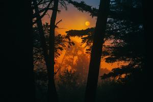Sun in the Mist, Through the Trees, Oakland California by Vincent James