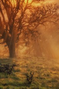 Sun Tree Beams by Vincent James