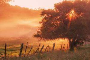Sunburst Tree, Sunrise in Petaluma, Sonoma Valley, California by Vincent James