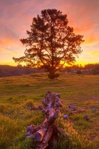 Sunrise at Oakland Hills by Vincent James