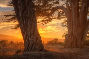 Sunrise Light Under Cypress Trees, Point Reyes by Vincent James
