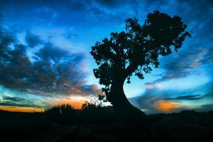 Sunrise Tree at Dead Horse Point, Southern Utah by Vincent James