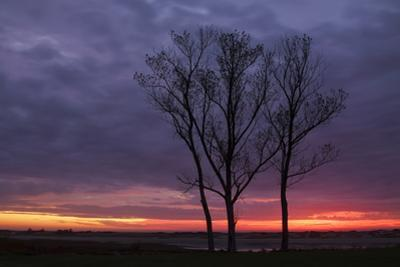 Sunrise Trees at Ogunquit, Maine Coast by Vincent James