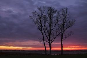 Sunrise Trees at Ogunquit, Maine Coast by Vincent James