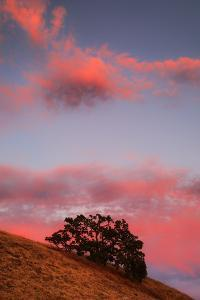 Sunset Magic Hillsdie Mount Diablo California Coast Live Oak Trees by Vincent James