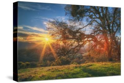 Sunset Oak, Mount Diablo State Park, Northern California