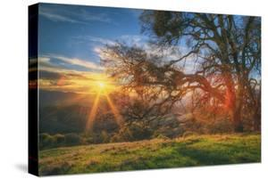 Sunset Oak, Mount Diablo State Park, Northern California by Vincent James
