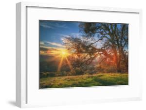 Sunset Oak, Mount Diablo State Park, Northern California by Vincent James