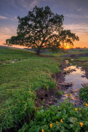 Sunset Steam at Table Mountain, Oroville California by Vincent James