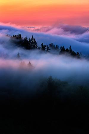 Sunset Trees Fog Design Mount Tamalpais Tam San Francisco Beautiful by Vincent James