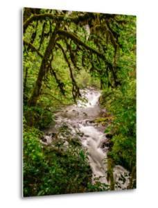 Sweet Creek Flowing Through The Forest, Oregon Coast by Vincent James