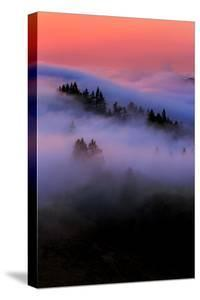 Sweet Fog Candy and Trees, Northern California Mount Tamalpais by Vincent James