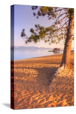Tahoe Lake Tree
