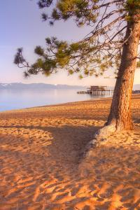 Tahoe Lake Tree by Vincent James