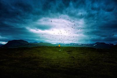 Tern Study Area, North Iceland Birds and Sky Drama by Vincent James