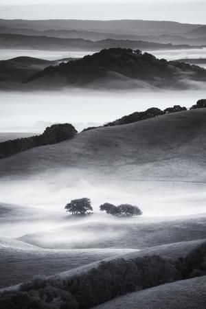 The Hills I Love Black White Mist Fog Petaluma Sonoma California by Vincent James
