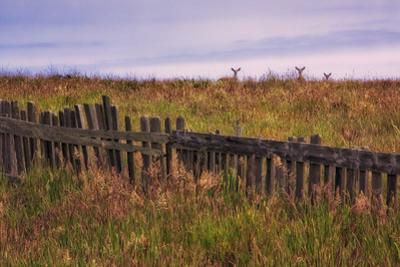 Three Deer at Sea Ranch by Vincent James