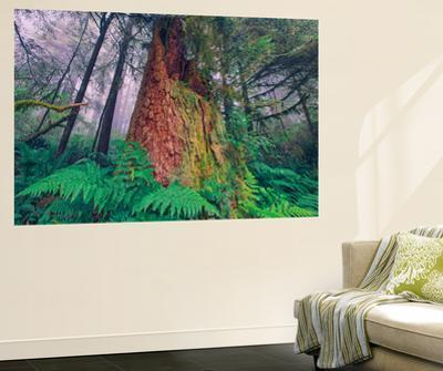 Time Tree, California Redwood Coast by Vincent James