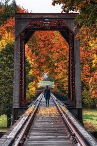 Tracks into Autumn, Silverton, Oregon by Vincent James