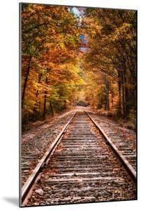 Tracks Into Fall, White Mountains New Hampshire, New England in Autumn by Vincent James
