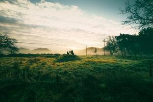 Tractor Landscape, Misty Sonoma County Morning, Bay Area by Vincent James