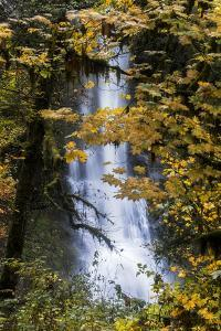 Tranquil Waterfall Oasis Shrouded in Trees, Silverton South Falls, Portland, Oregon by Vincent James