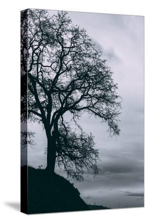 Tree in the Sky, Black and White Mount Diablo, Walnut Creek Danville